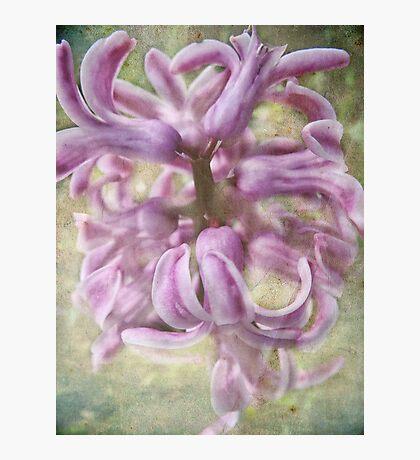Sweet Smelling Spring Fotodruck