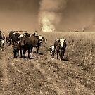 Away from the Fire by photograham