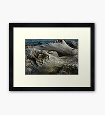 Natural History 2 Framed Print