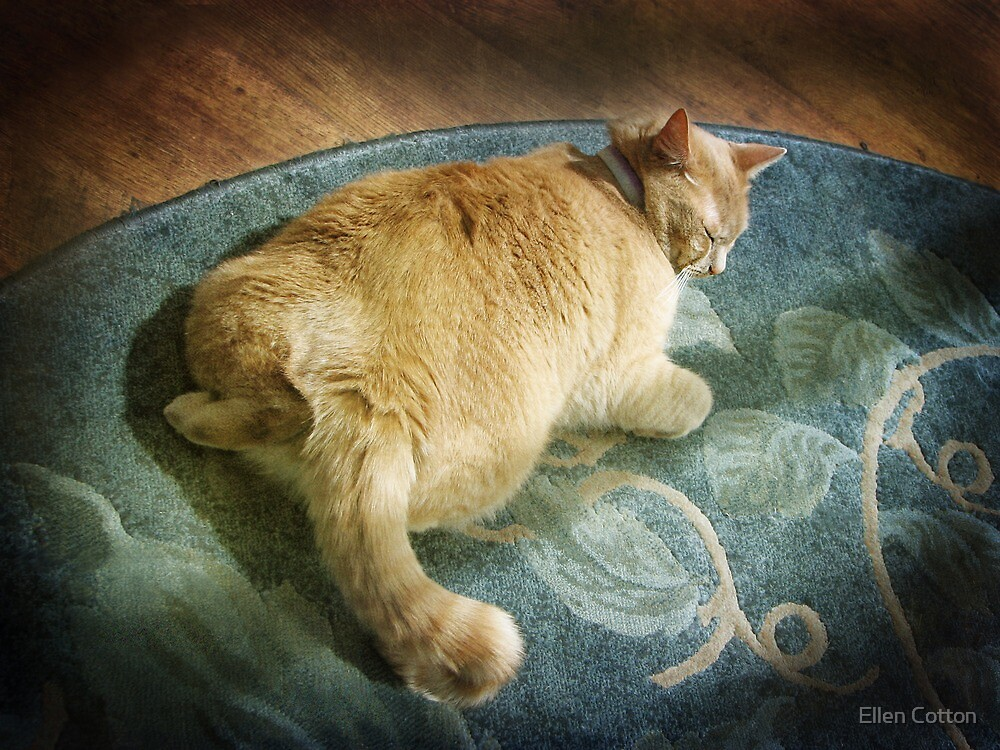 Fat Cat on a Rug by Ellen Cotton