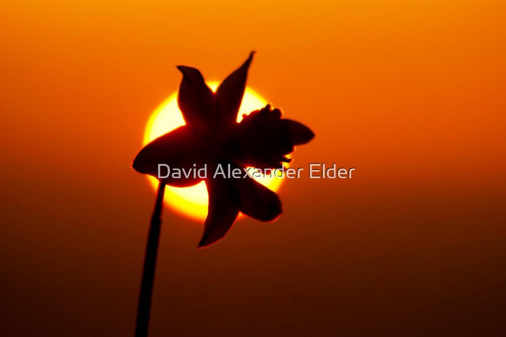 Spring Has Sprung by David Alexander Elder