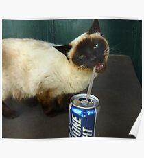 Cat Is Enjoying Kaua'i Poster