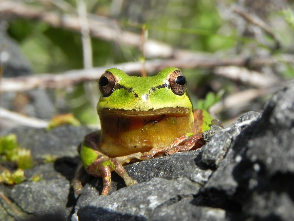 Frog Prince by samela7