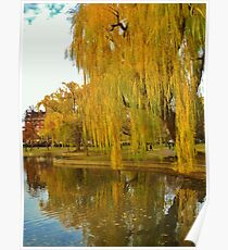 Lakeside Willow Poster