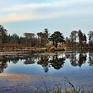 The Curling Pond by Lynne Morris