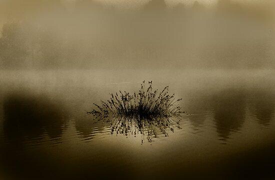 Fog on Lake by BrettSimpson