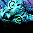 Siamese Cat by Thet Htut