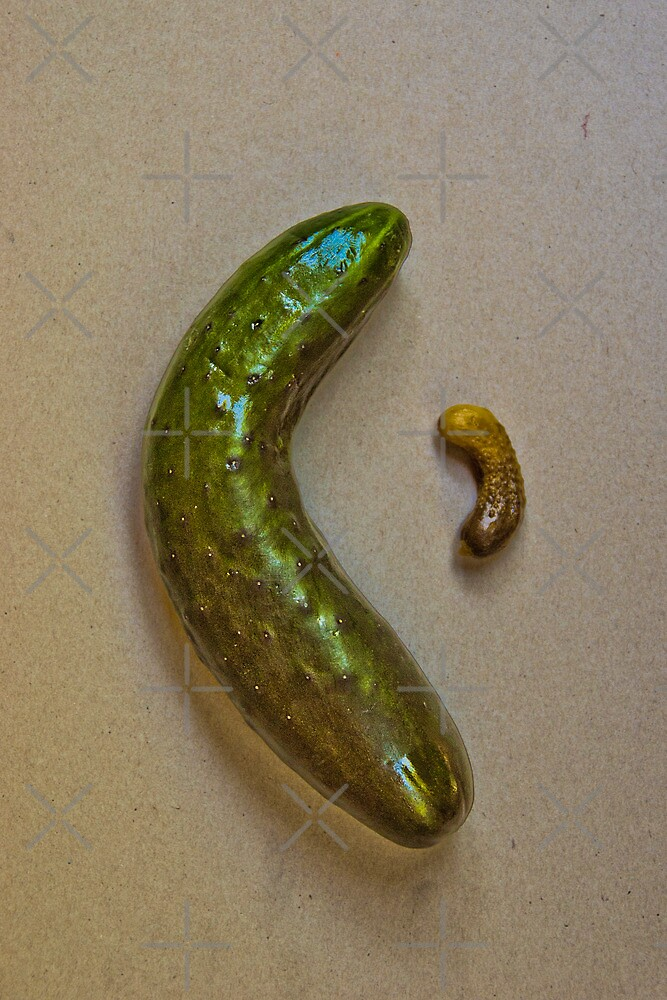 Once you become a pickle, you can never go back!  by monica palermo