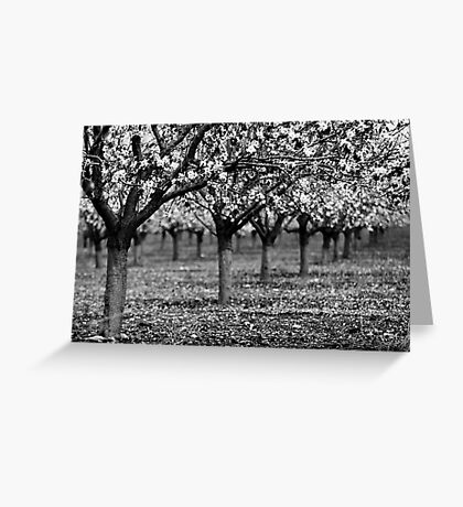 trees in raw Greeting Card