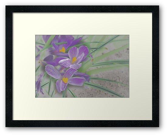 Flowers in the Field by peterrobinsonjr