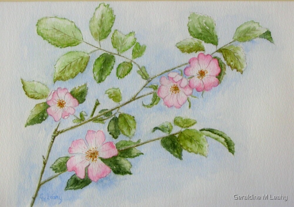 Wild Roses by Geraldine M Leahy
