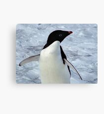 Adelie Penguin Portrait Canvas Print