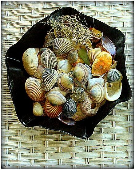 Shells in a LP record by myraj