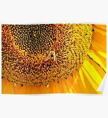 Sunflower Bee Poster