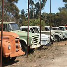 Vintage Trucks (7328) by ScenerybyDesign
