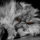 Orange eyes by PhotoTamara
