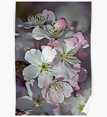 Pink Spring Blossom Poster