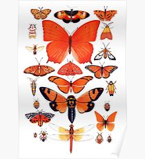 Orange Insect Collection Poster