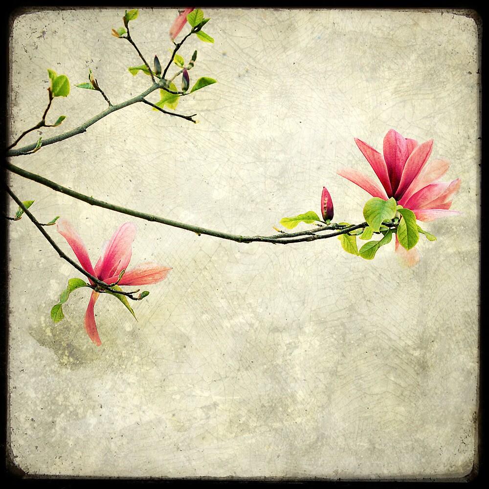 Branche de Magnolia by Marc Loret