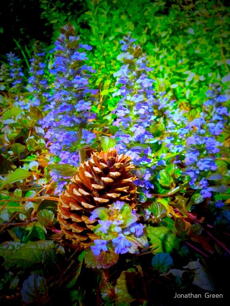 Ajuga Flowers & Pine Cone By Jonathan Green by Jonathan  Green