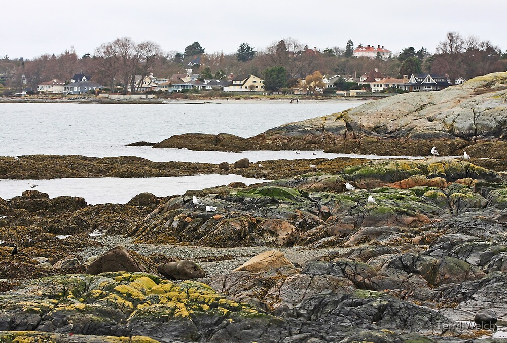 In the Rain at Cattle Point Victoria B.C.  by TerrillWelch