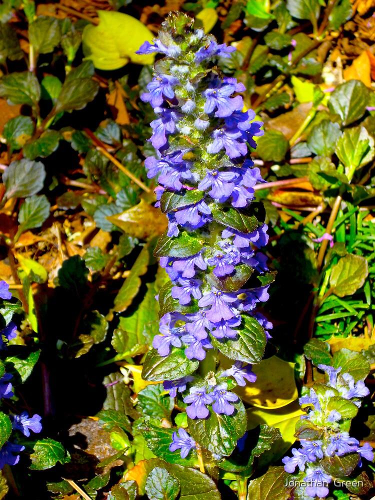 Ajuga Flowers By Jonathan Green by Jonathan  Green
