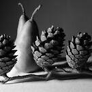 pears & pine cones by Janine Paris