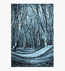 English Forest Trees  Photographic Print