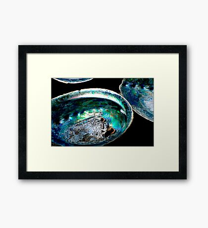 Paua Shells Framed Print