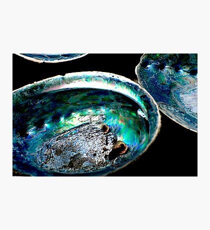 Paua Shells Photographic Print