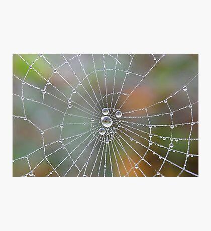 Web Dew Photographic Print
