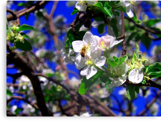 Bee on Flower by Tyler Elbert