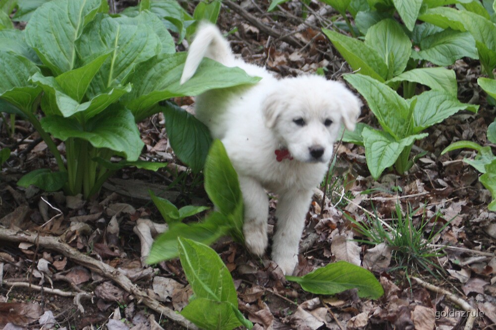 Torro Among The Skunk Cabbage by goldnzrule
