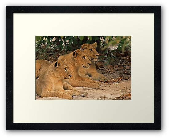 Triple the fun by Explorations Africa Dan MacKenzie