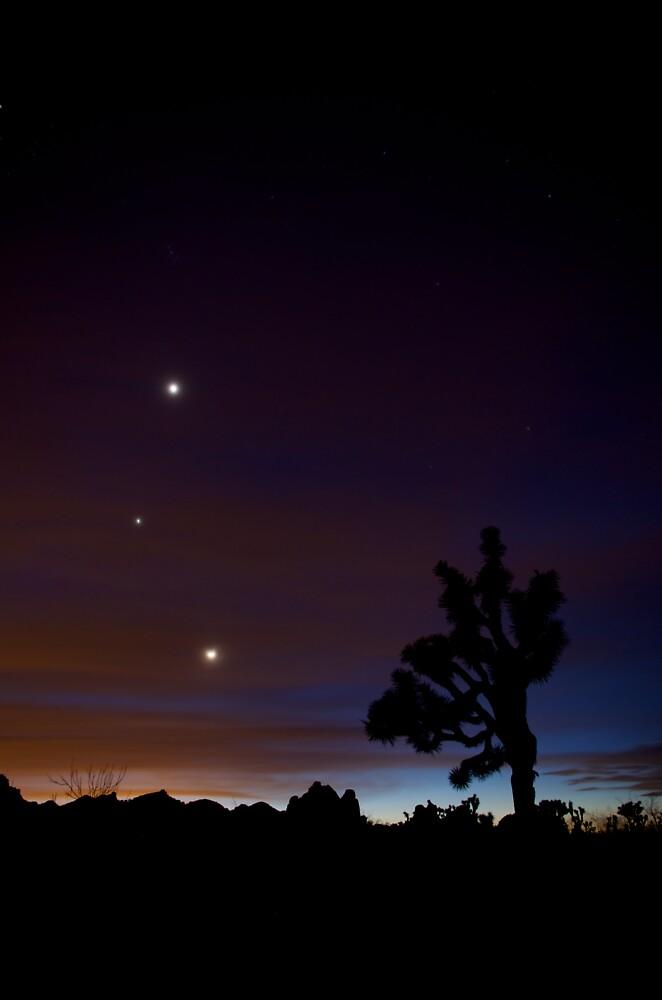 Brightest Lights by Troy Dalmasso