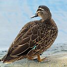 Duck By The Water by Toni Kane