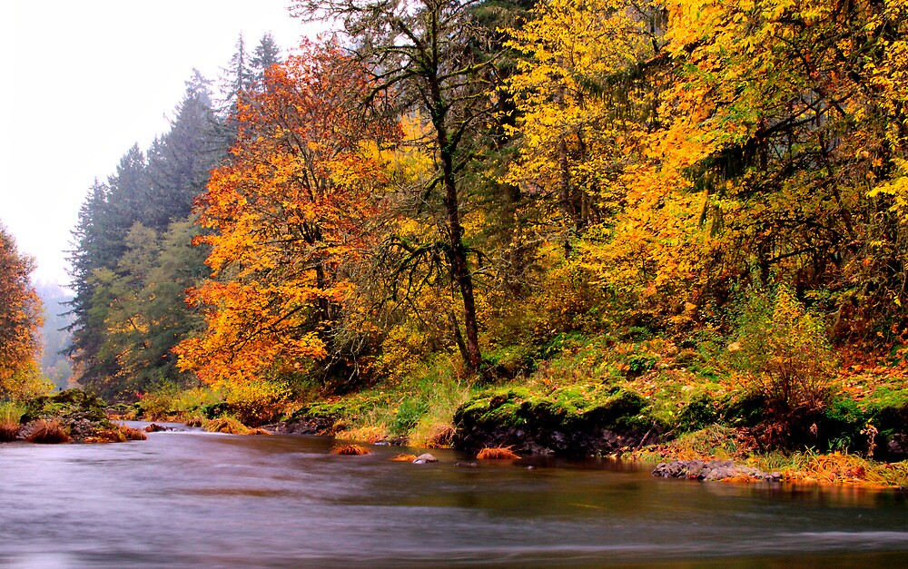 A Time To Remember by Charles & Patricia   Harkins ~ Picture Oregon
