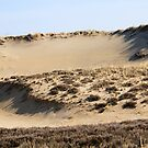The Dunes by Lynn Wiles