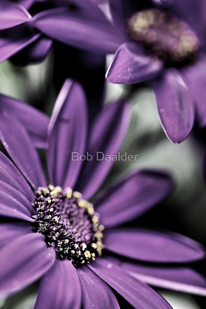 Purple Haze... squared... by Bob Daalder