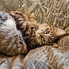 Camo Kitty by Marcia Rubin