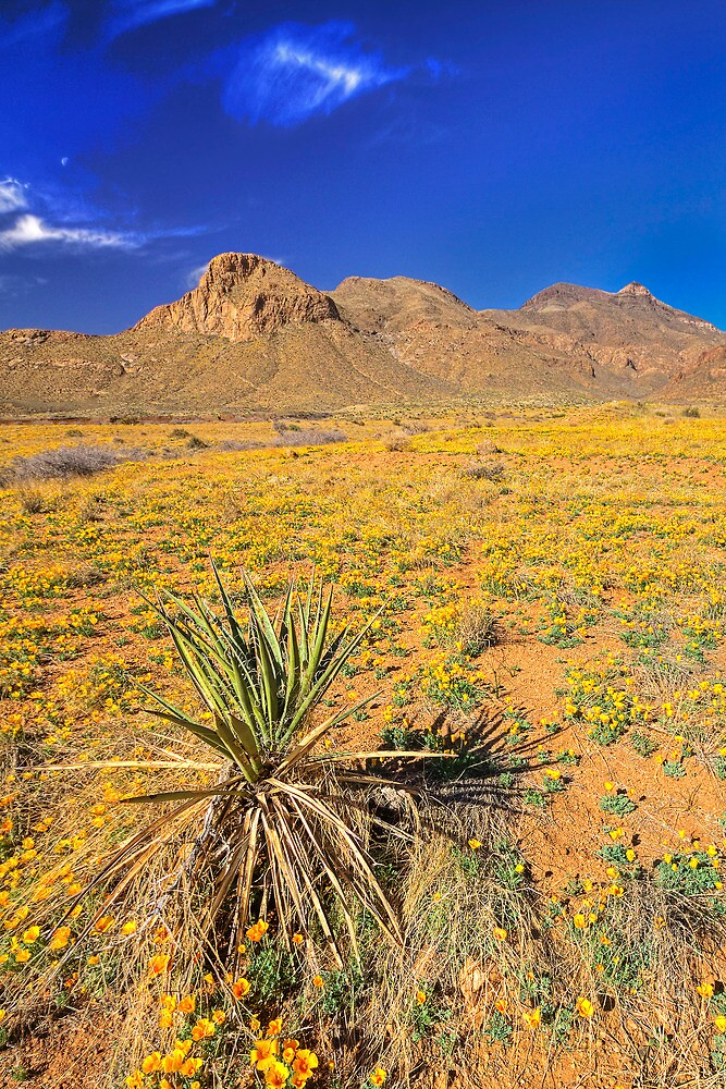 Franklin Mountains in Bloom by Ray Chiarello