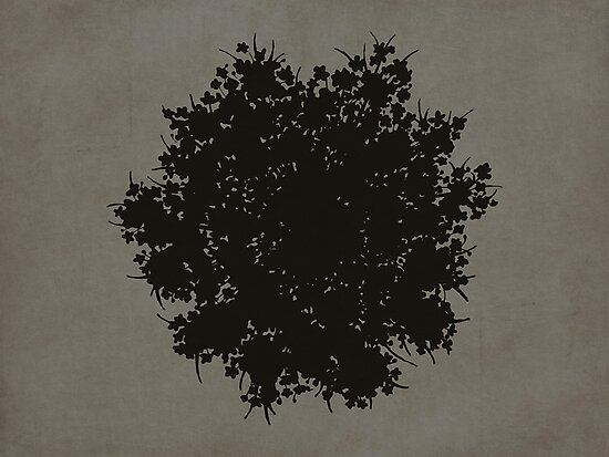 Queen Anne's Lace in Black & Gray by Elle Campbell