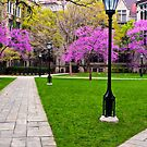University of Chicago in Bloom by James Watkins
