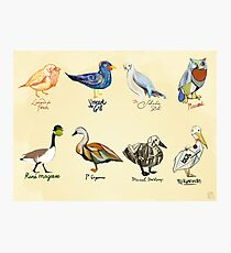 Art Fowl Photographic Print