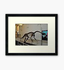 plateosaurus skeletal frame Framed Print