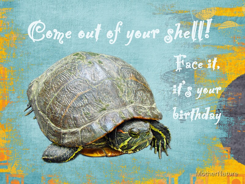 Birthday Card Painted Turtle Greeting Cards by MotherNature – Nature Birthday Card