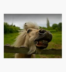 Funny Horse Photographic Print