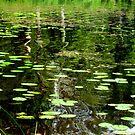 Pond by Pauli Hyvönen