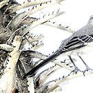 Song Bird  by Sandra Russell