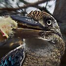 Kookaburra  by JuliaKHarwood
